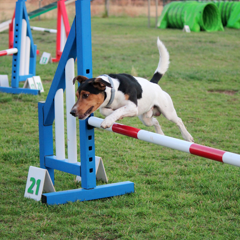 Dog Agility Demonstration